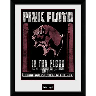 Pink Floyd 1977 Collector Print