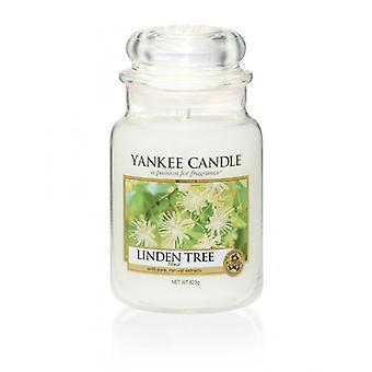 Yankee Kerze klassische große Jar Linden Baum Kerze 623g