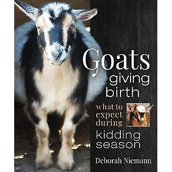 Goats Giving Birth  What to Expect during Kidding Season by Deborah Niemann