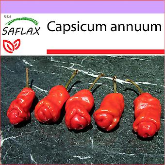 Saflax - 10 seeds - Chili - Peter Peppers Penis Chili - Piment - Peter Peppers Pénis Chili - Peperoncino Peter Peppers Penis - Pimientas de chile Peter en forma de pene - Chili - Peter Peppers Penis Chili