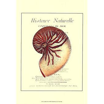 Coquilles De Mer I Poster Print (13 x 19)