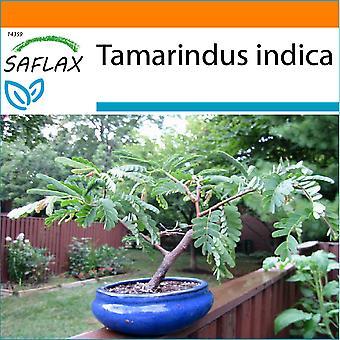 Saflax - giardino nel sacchetto - 4 Semi - Bonsai - Tamarindo - Dattier d'Inde - Tamarindo / Dattero dell'India - Tamarindo - B - Tamarinde