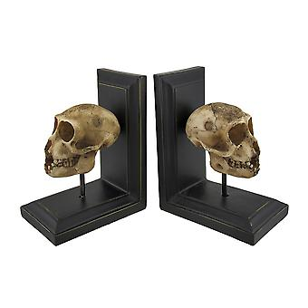 Mounted Neanderthal Skull Bookend Set of 2