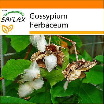 Saflax - Garten in der Tasche - 12 Samen - Levante Baumwolle - Cotonnier - Cotone asiatisch - Algodón - Topfbaumwolle