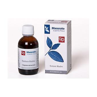 Potentilla - Fresh Macerated Plant 100 ml