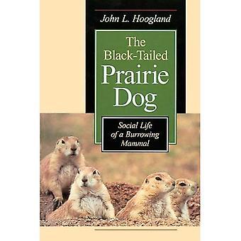 Der Schwarz-Angebundene Grasland-Hund: Sozialleben buddelnden Säugetier