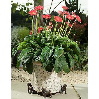 Potty Feet Decorative Pug Themed Plant Pot Feet Antique Bronze Color Set of 3