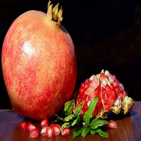 Punica granatum (Pomegranate) - Plant