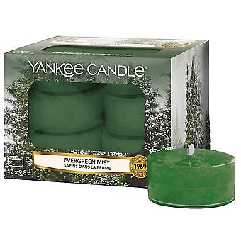 Yankee Candle Classic Tealights Evergreen Mist