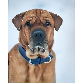 رالف آند Co ريميني الجلود مزدوجة الكلب قلادة