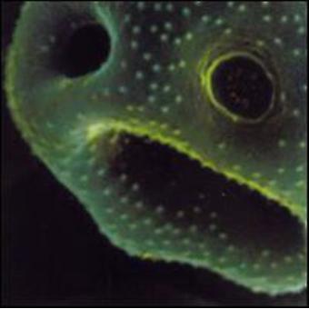 Robert Scott - Creeping Unknown [CD] USA import