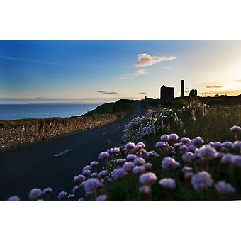 Seapink lining the country road  County Waterford Ireland Poster Print