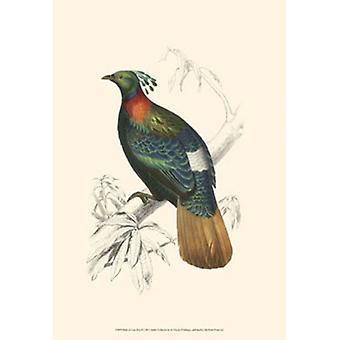 الطيور لطباعة الملصق الثاني كوستاريكا من ج دوربيجنيي (13 × 19)