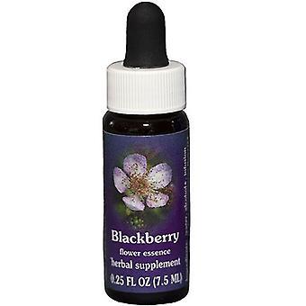 Flower Essence Tjänster Blackberry Dropper, 0,25 oz