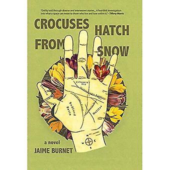 Crocuses Hatch van Sneeuw