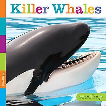 Plantor: Killer Whales (plantor)