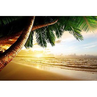 Tapete Mural Caribbean Beach Sunrise