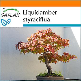 Saflax - Garden i Bag - 100 frø - Bonsai - amerikanske Sweet Gum - Copalme d'Amérique - Storace americano - Arbol del ámbar - B - Amerikanischer Amberbaum