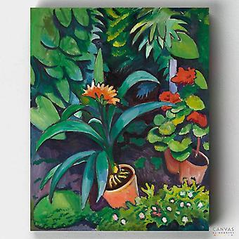 פרחים בגן, קליביה ופלרגוניאן - אוגוסט מיקה