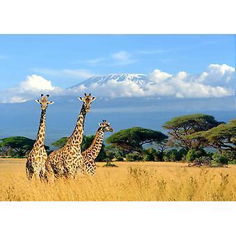Jirafas murales de papel pintado en el Kilimanjaro