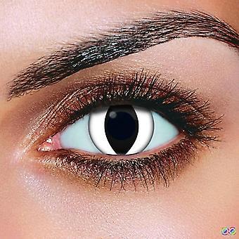 Weiße Katze Kontaktlinsen (Paar)