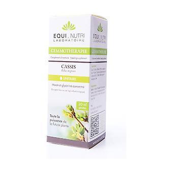 Cassis BIO - Ribes nigrum 30 ml