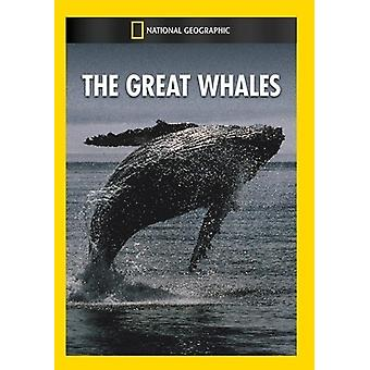 Great Whales [DVD] USA import