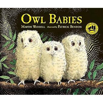 Owl Babies by Martin Waddell - 9780763695194 Book