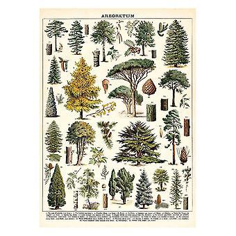 Cavallini Arboretum Trees Vintage Poster   Wall Art Print Craft Wrap Luxury