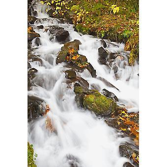 Vatten forsande ner en kulle PosterPrint