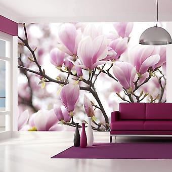 Papel de parede - Ramos magnólias em flor