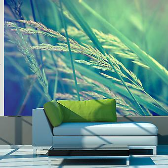 Wallpaper - Cereal field