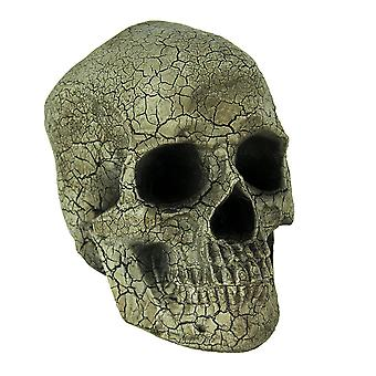 Antiqued Crackled Finish Human Skull Statue