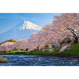 Tapete Wandbild Fuji und Sakura