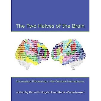 The Two Halves of the Brain: Information Processing in the Cerebral Hemispheres