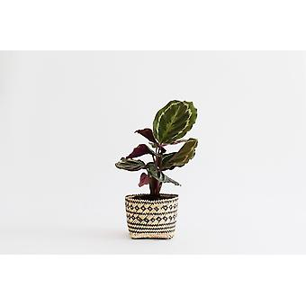 4'' Prayer Plant + Basket4 Prayer Plant + Basket. Have You Noticed How Much One Plant Can Do?xa0 You Walk in the Room and There It Is