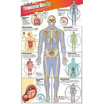 DKfindout Human Body Poster