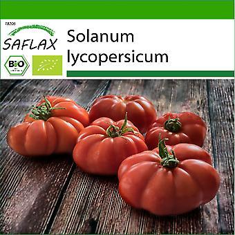 Saflax - 10 semi - Con terreno - Biologico - Pomodoro - Rouge de Marmande - BIO - Tomate - Marmande - BIO - Pomodoro - Rouge de Marmande - Ecológico - Tomate - Rouge de Marmande - BIO - Tomate - Rouge de Marmande