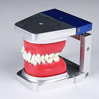 Dental Orthodontic Practice Tooth Model