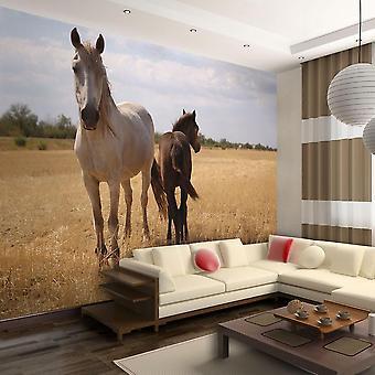 Dierlijk behang - Paard en veulen