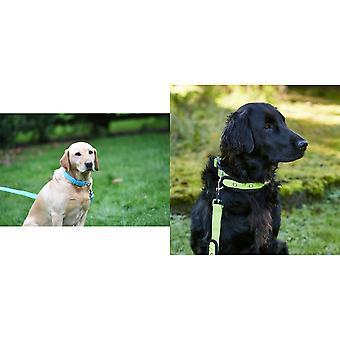 Woofmasta Hi-Viz Flashing Dog Collar