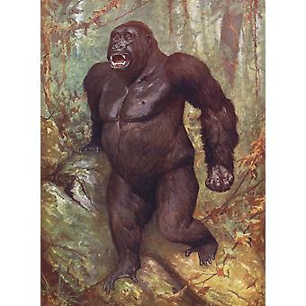 Gorilla elävistä eläimistä maailman julkaistu C1900 PosterPrint
