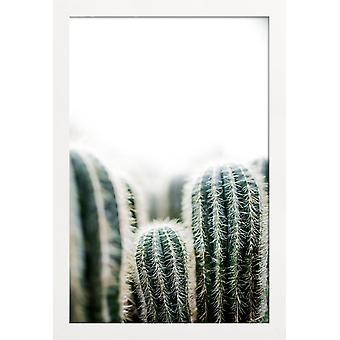 JUNIQE Print - Cactus 1 - Kaktus plakat i grøn / hvid