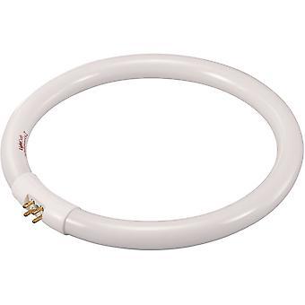 Toolcraft 821665 T5 22W G10q Fluorescent Ring Shape Bulb - 185mm Diameter