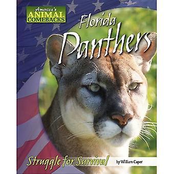 Florida Panthers: Struggle for Survival