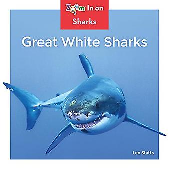 Great White Sharks (requins)
