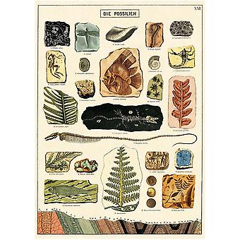 Cavallini Fossil Wrapping Paper Poster / Poster High Quality / Decoupage