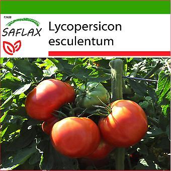 Saflax - 10 semi - con terreno - pomodoro - Rose de Berna - Tomate Rose de Berna - Pomodoro Rosa di Berna - Tomate - Rosa de Berne - Tomate - Rose de Berna