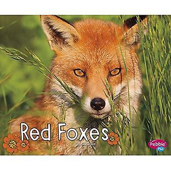 Red ketut (metsän villieläimet)