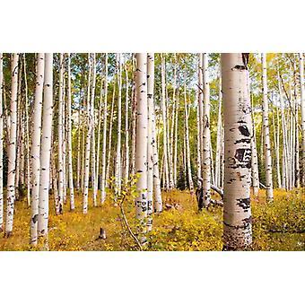 Sfondo Mural Birches in Montagne Rocciose